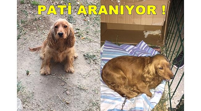 KAYIP PATİ ARANIYOR