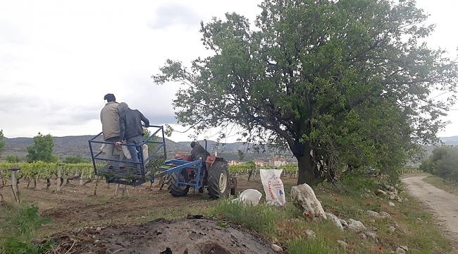 BULDAN'DA BAHAR MEYVESİ ÇAĞLA'NIN HASADI SÜRÜYOR